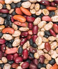 Sorting beans activities