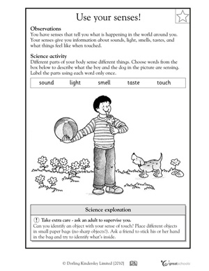 5 Senses Worksheets Middle School - 5 senses worksheets middle ...